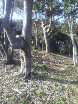 昨年までは鬱蒼と女竹が生い茂っていたはずなのに・・・