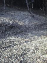 竹の残骸がとても痛々しいです。