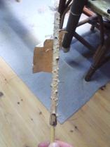 これが籐の原材。元々は緑色をしています。トゲトゲの皮を剥き用途に応じて縦に裂いていきます。