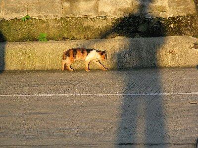 猫と遊ぶ.jpg
