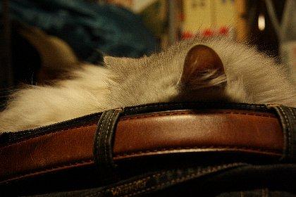 猫が眠る.jpg