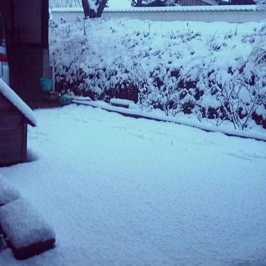 2014//2/8の雪の朝
