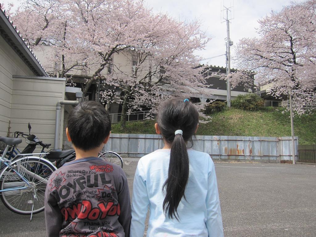 2011.04.10_お花見LR (1)