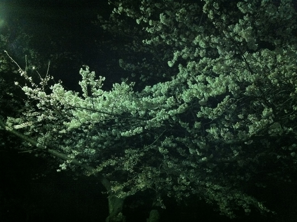 2011.04.05_光が丘公園