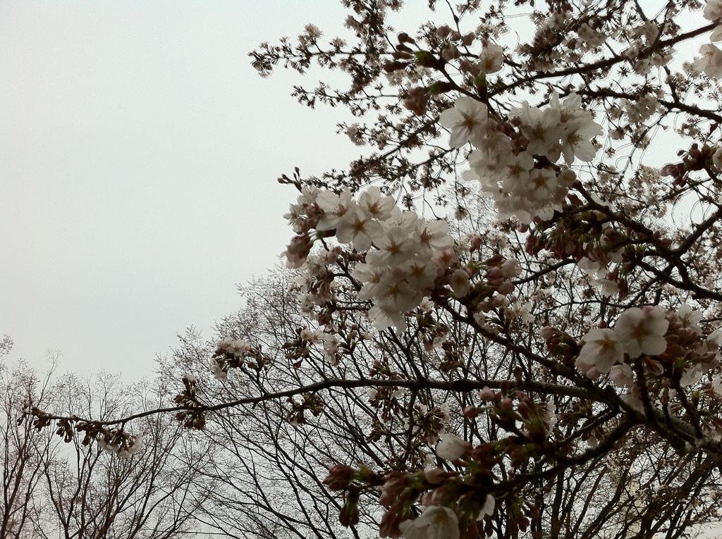 2011.04.02_光が丘公園