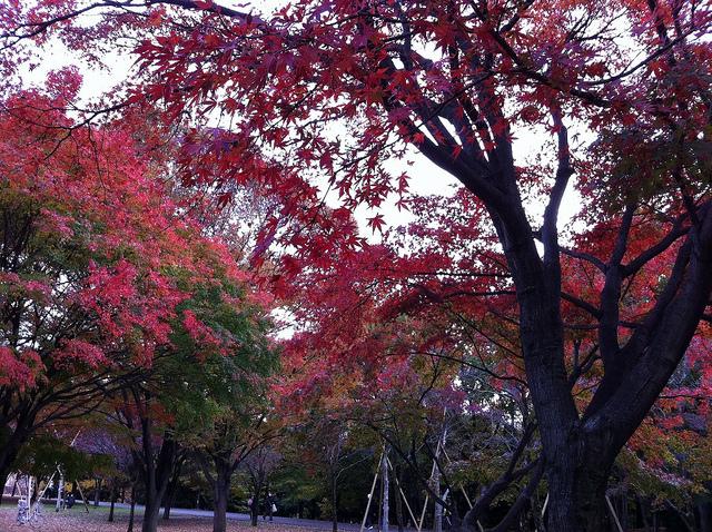 2010.11.23_光が丘の紅葉