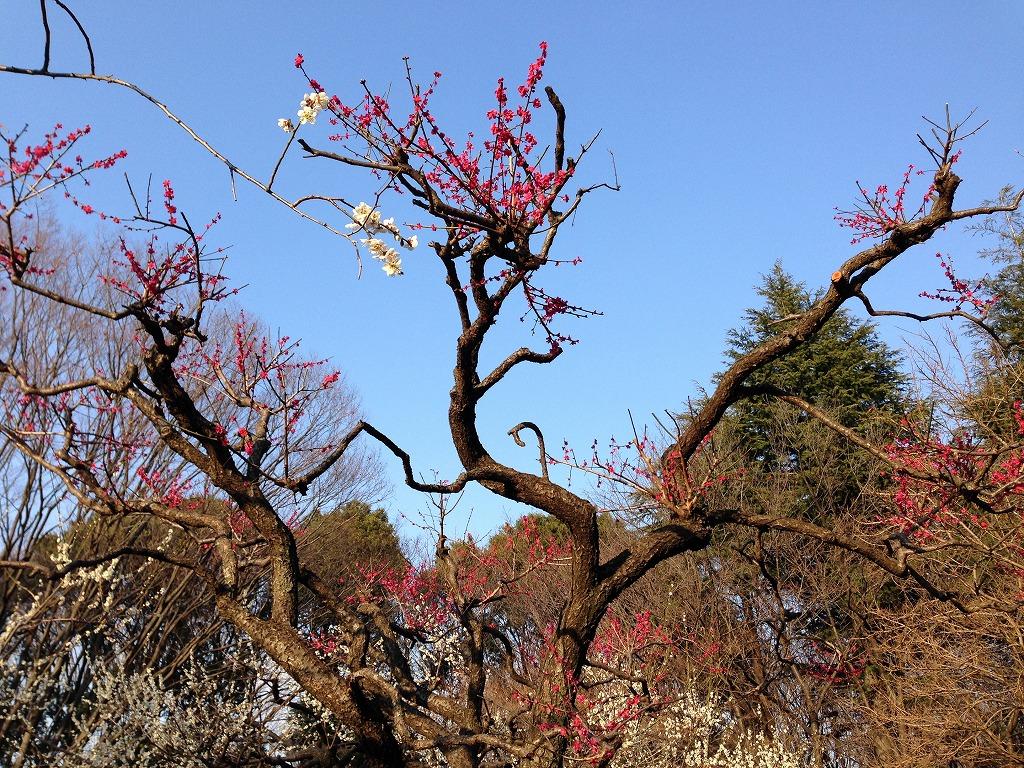 20140316_光が丘 (2)