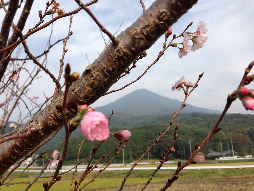 20131103_つくばりんりんLR (7)