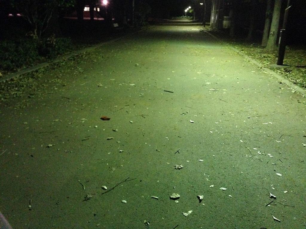 20131017_光が丘公園 (1)