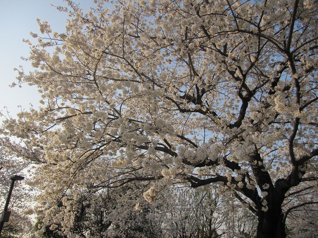 20130328_川越運動公園 (4)
