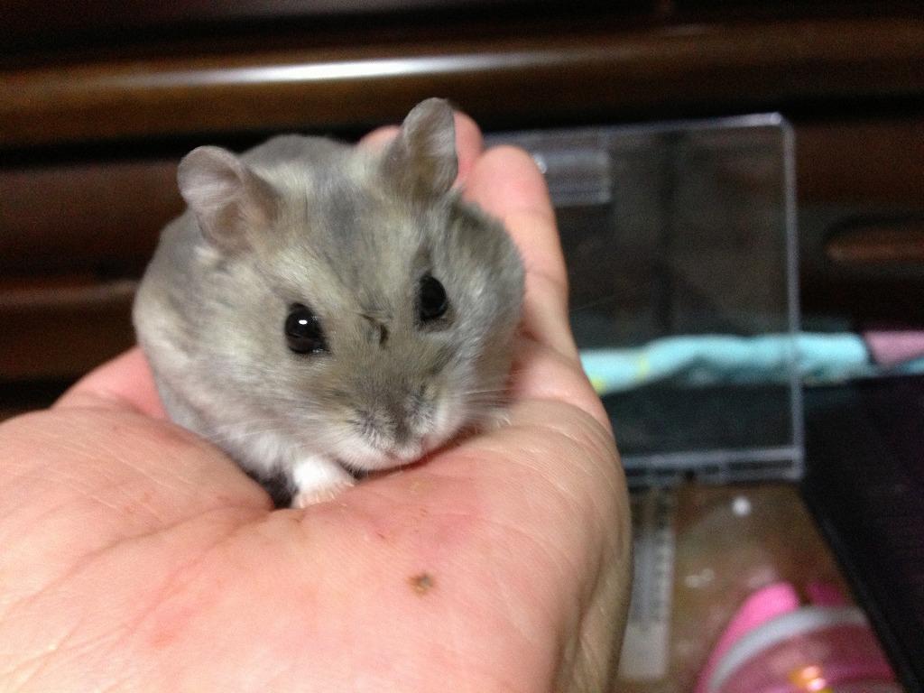 20130123_hamster