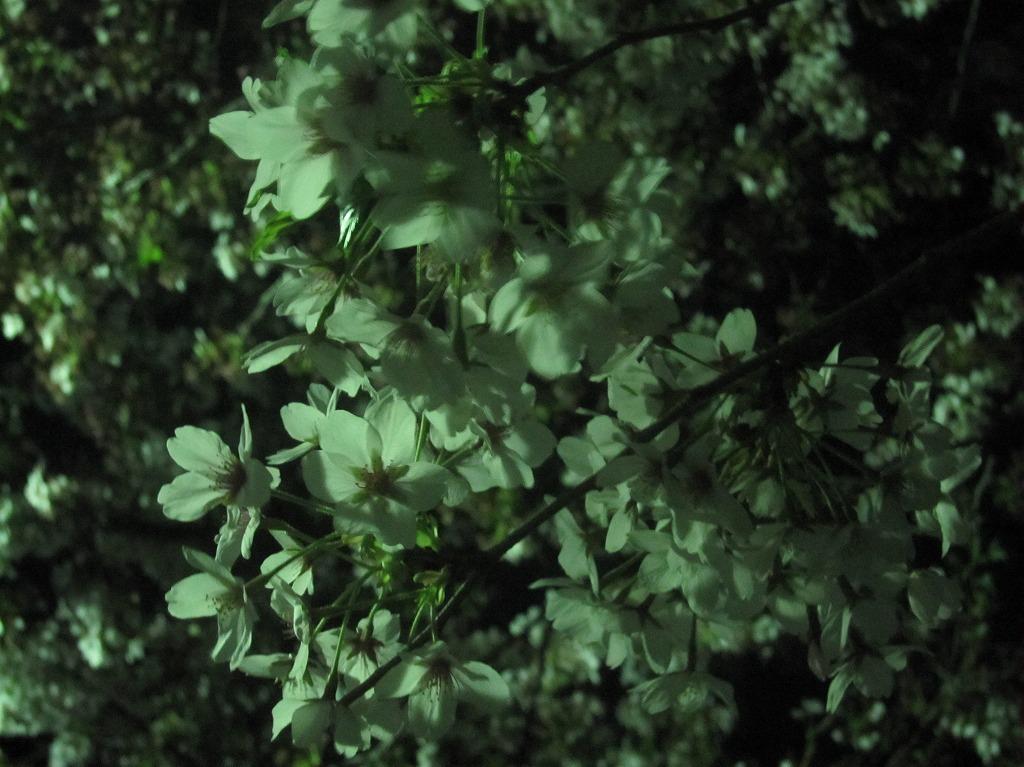 20120412_光が丘 (1)