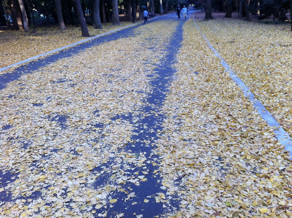 2011.12.17_光が丘公園