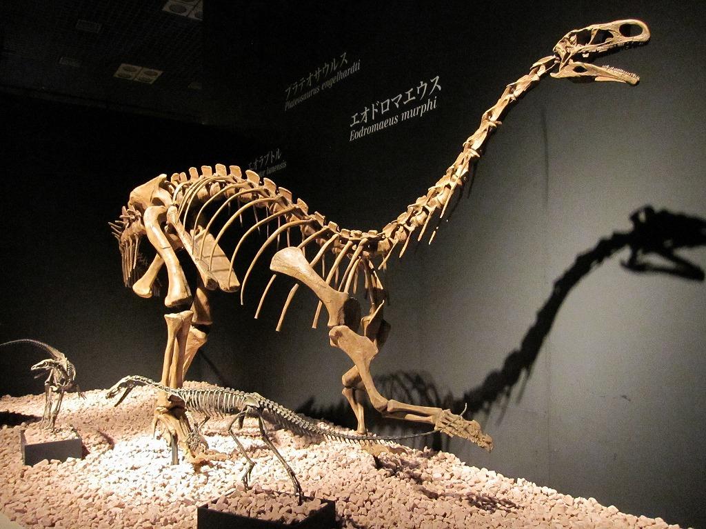 2011.07.17_恐竜博 (1)
