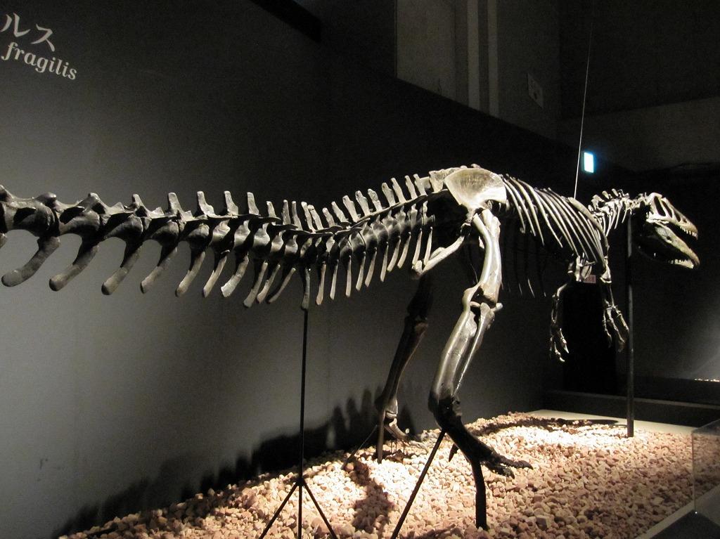 2011.07.17_恐竜博 (2)