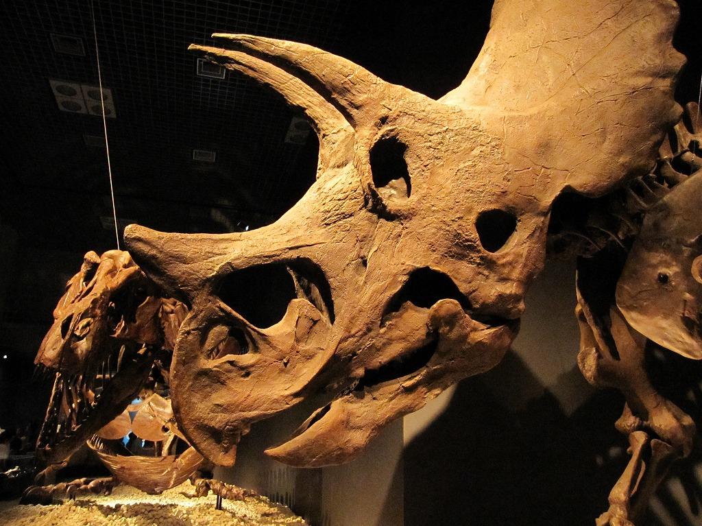 2011.07.17_恐竜博 (3)