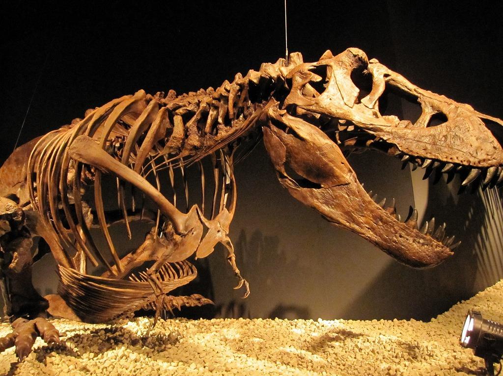 2011.07.17_恐竜博 (4)