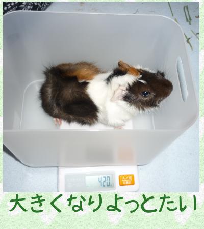 えんどう豆3