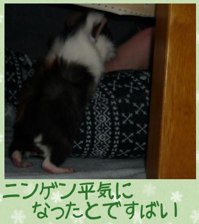 えんどう豆4