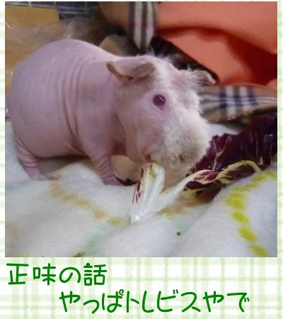 えんどう豆m1