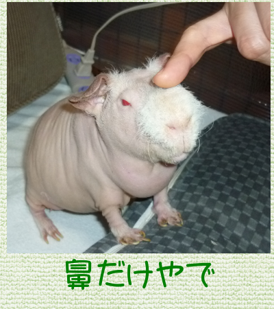 体重1月6日momo
