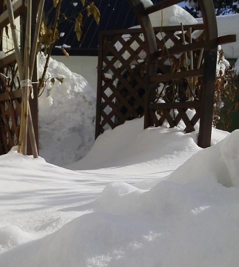 雪に埋もれてる