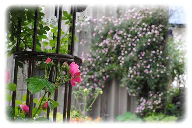7月1日の庭