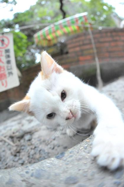 魚眼仔猫/猫パンチ