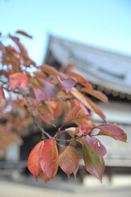 秋色/仁和寺