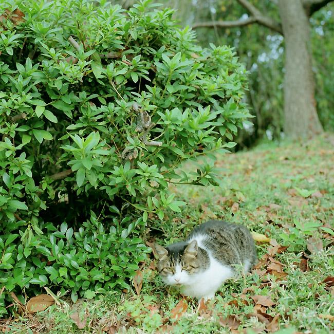 野良猫/公園