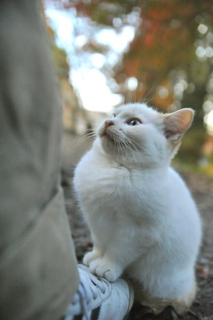 仔猫の定位置