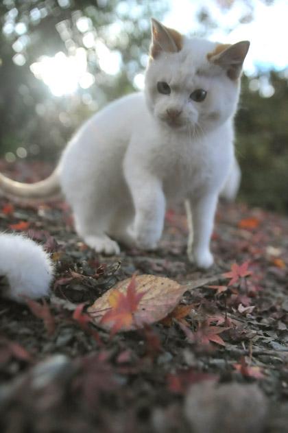 落葉と仔猫
