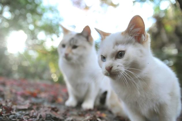 仔猫と落葉