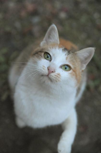 三毛猫モミジちゃん