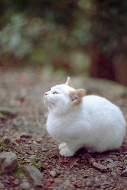 仔猫のチャミ