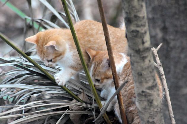 仔猫と仔猫