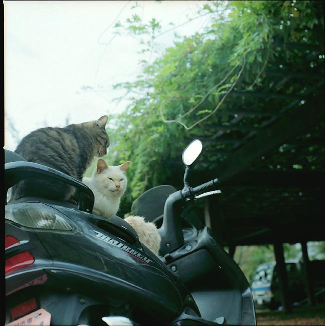 猫ライダーズ