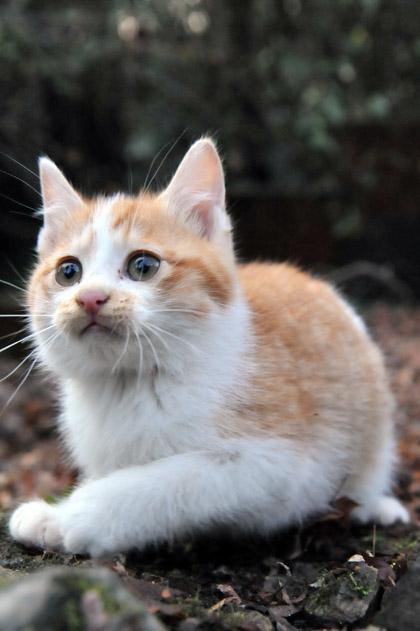 仔猫のキーちゃん