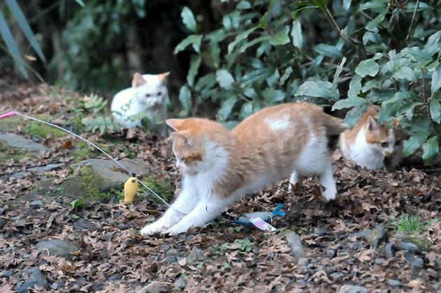 仔猫ズとチャミ