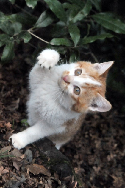 仔猫のポーズ