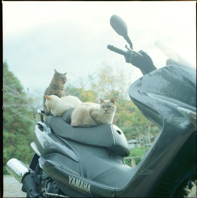 猫ライダーの連なり