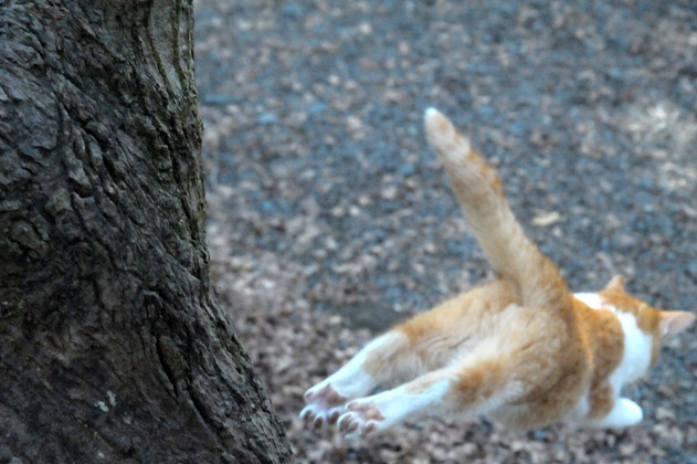 仔猫のダイブ