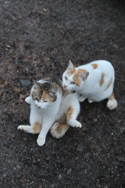 今日の猫スポット