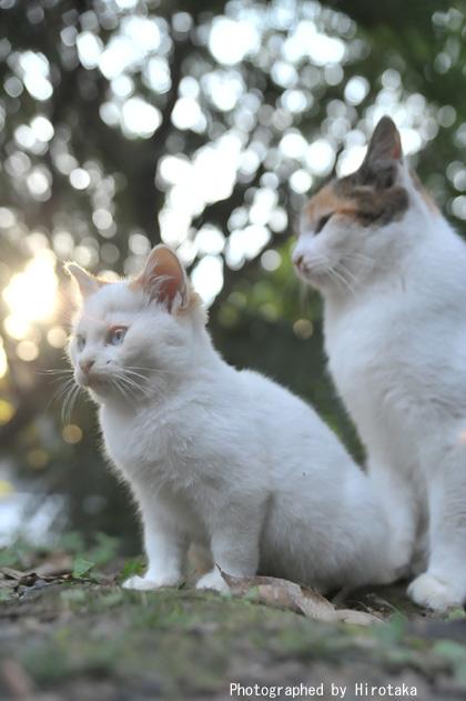 キラキラ仔猫