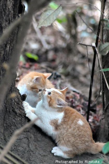 仔猫の戯れ