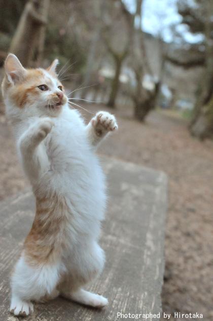 仔猫、立ち上がる。