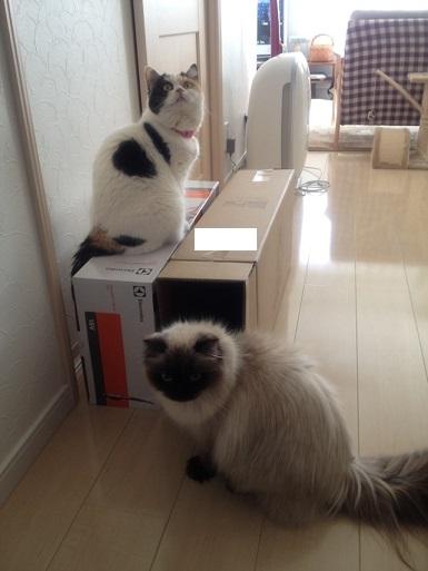 箱にむらがる猫たち2