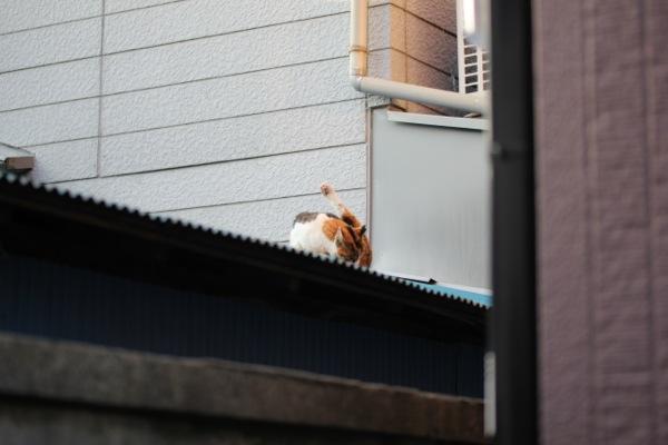 hatugami.jpg
