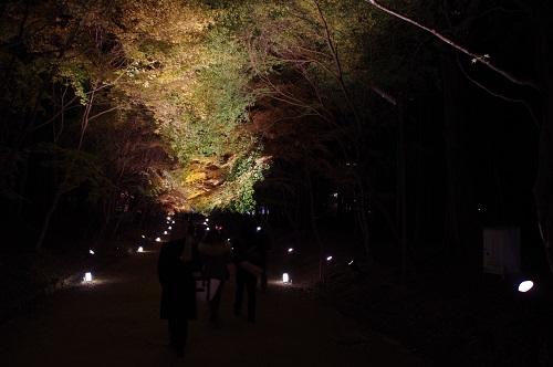 0877醍醐寺西大門入門ライトアップ
