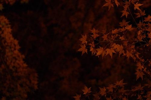 0881醍醐寺もみじライトアップ